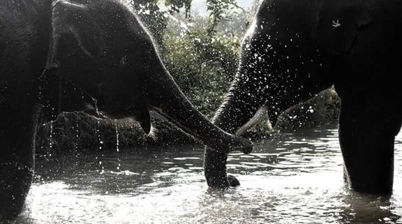 Southern Thailand Elephant Foundation, about us