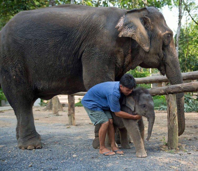 ethical elephant care