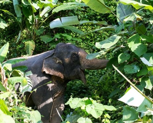 natural habitat for elephants