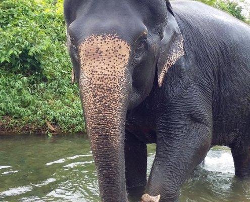 saving starving elephants