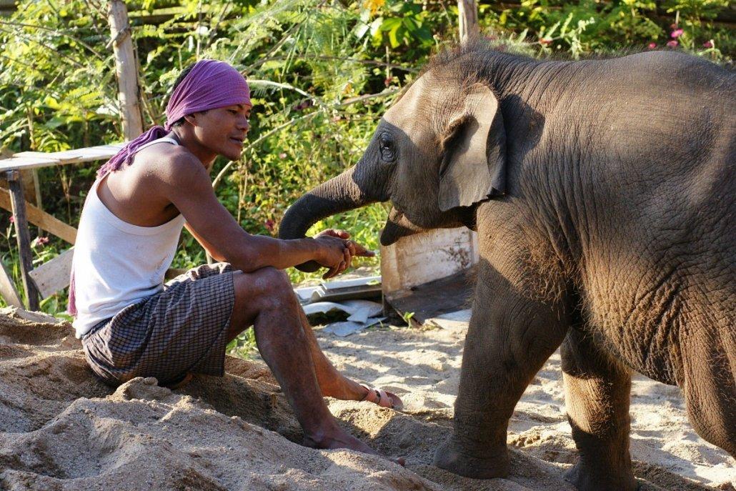elephant decline