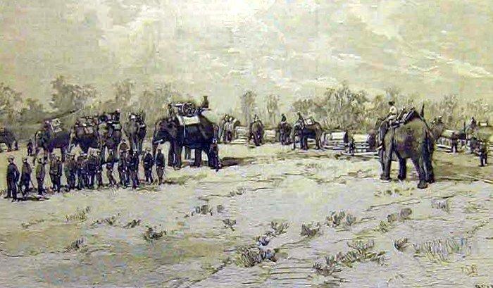 elephant history 1893