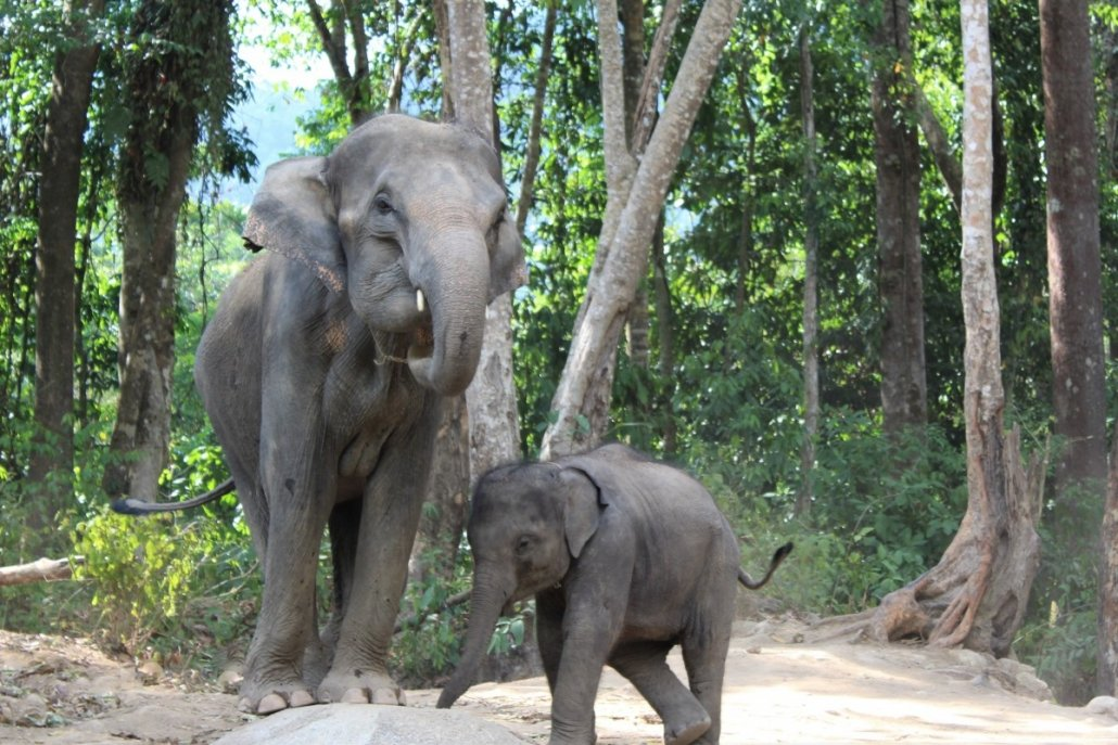 starving elephants