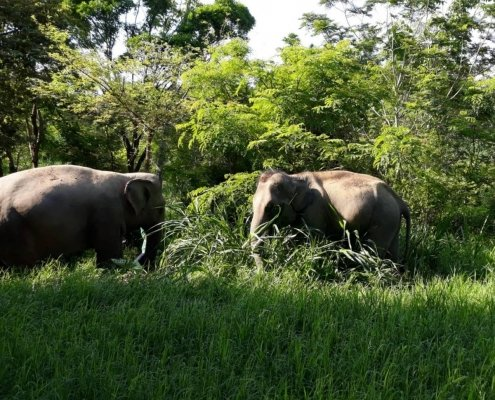 hungry elepohants