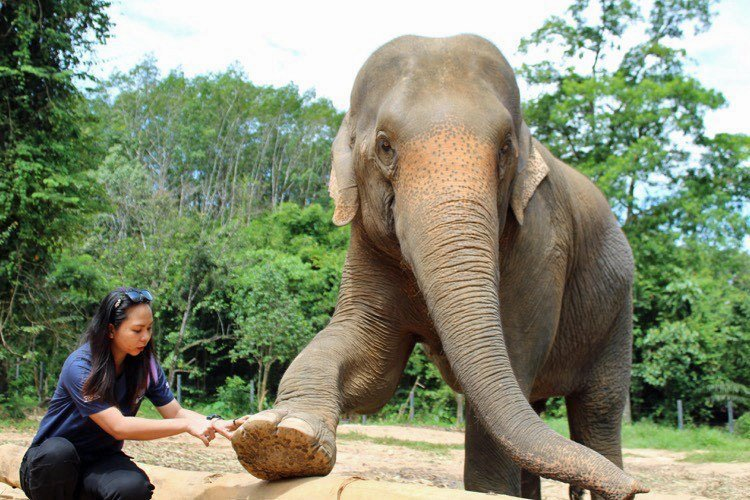 elephant care and safety