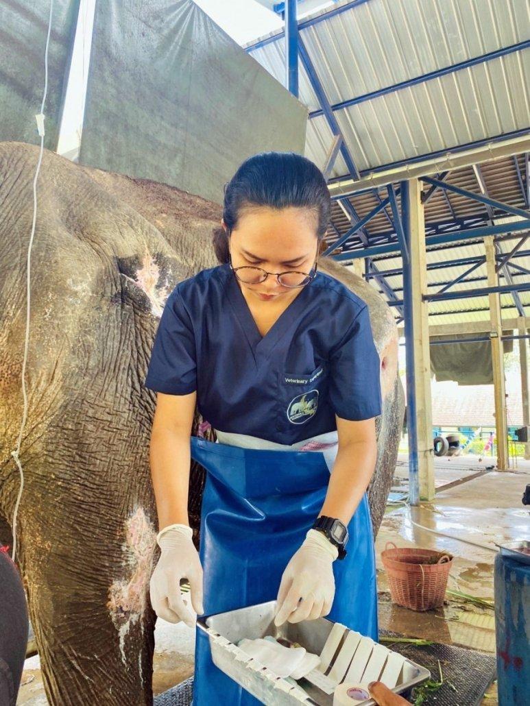 elephant veterinary centre