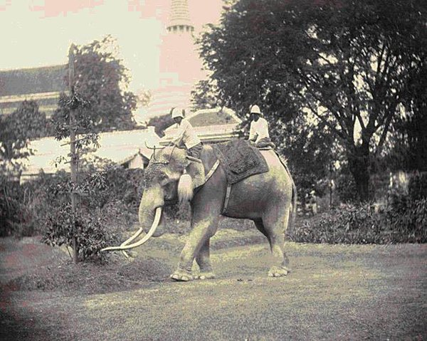 elephants in Buddhism