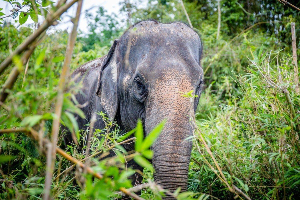 elephants in reglion