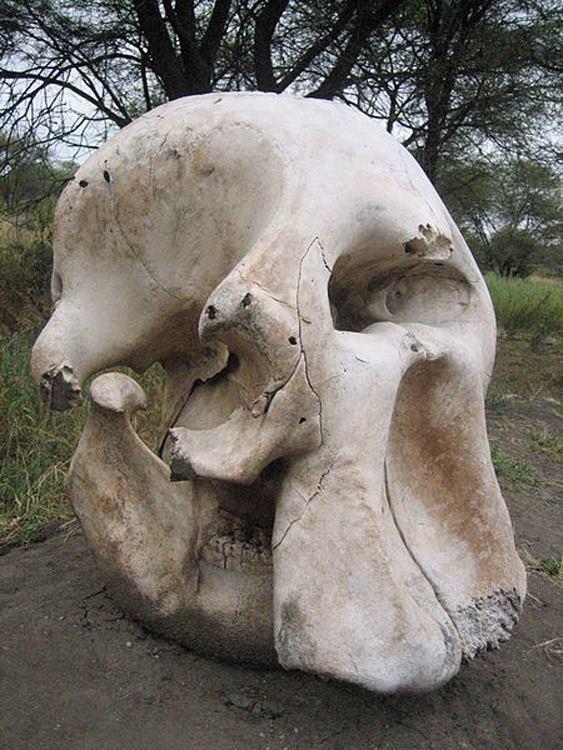 Elephants in mythology
