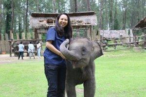 Saving Thailand's elephants