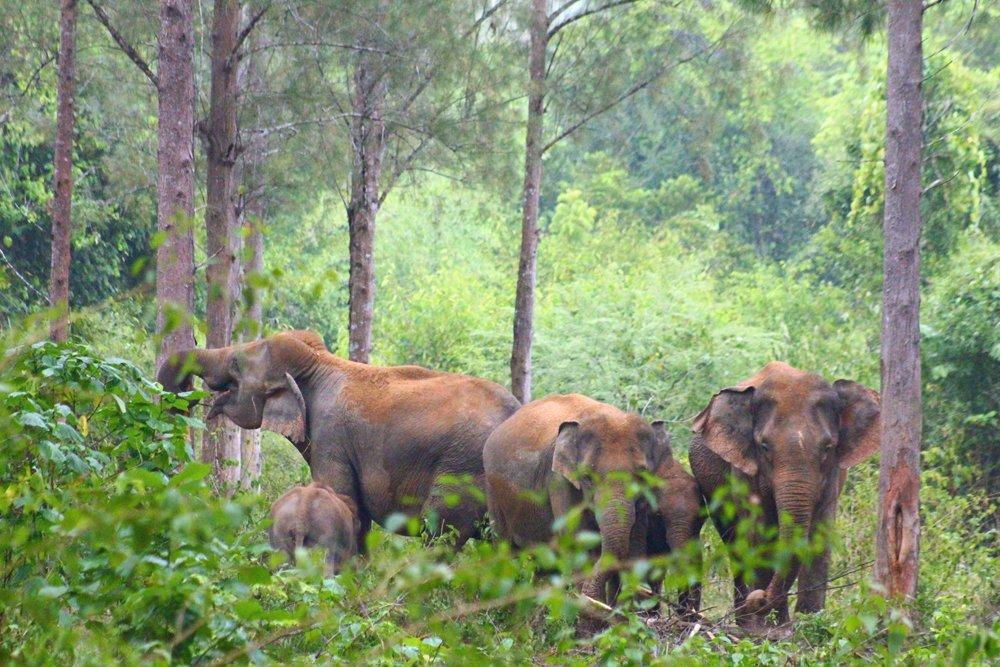 elephant networking