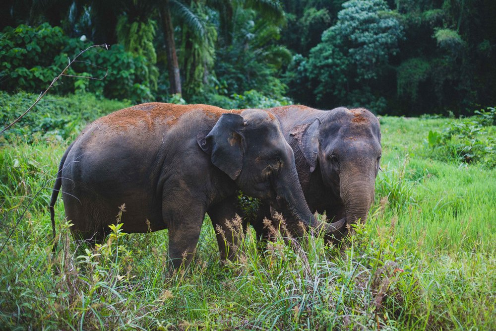 elephant welfare