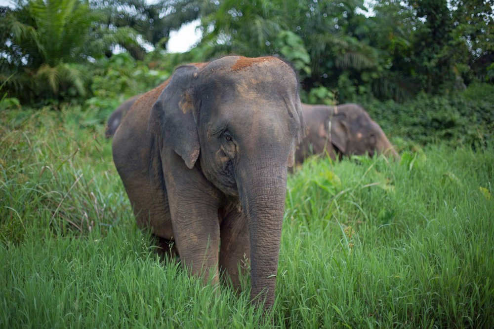 Elephants and the Law