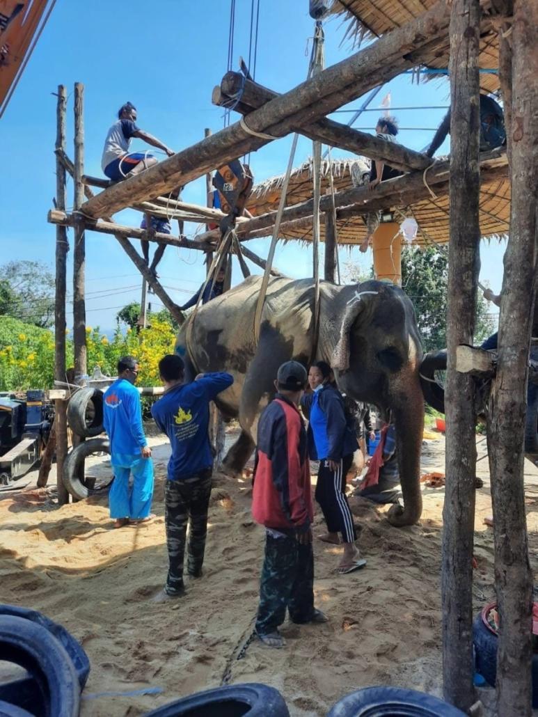 elephant vet
