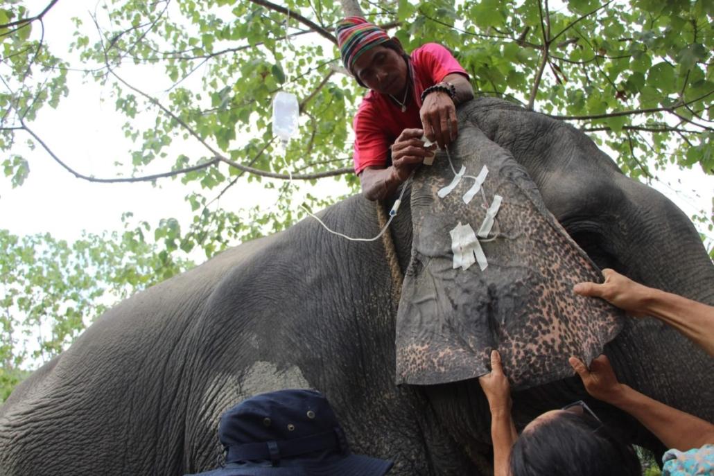 Elephant colic